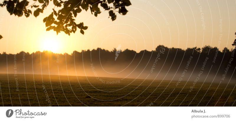 montagmorgen harmonisch ruhig Landschaft Urelemente Sonne Sonnenaufgang Sonnenuntergang Sonnenlicht Schönes Wetter Nebel Feld Wald leuchten gelb gold schwarz