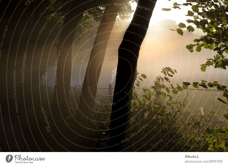 Morgenlicht im Hainesch harmonisch Erholung ruhig Meditation Natur Landschaft Sonne Sonnenaufgang Sonnenuntergang Sonnenlicht Nebel Baum Sträucher Feld Wald