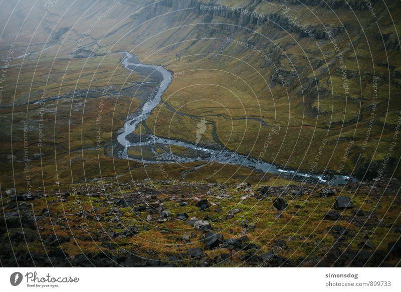 I'm in Iceland. Natur grün Landschaft Herbst braun Fluss Moos Island Bach Tal Flußbett Moosteppich