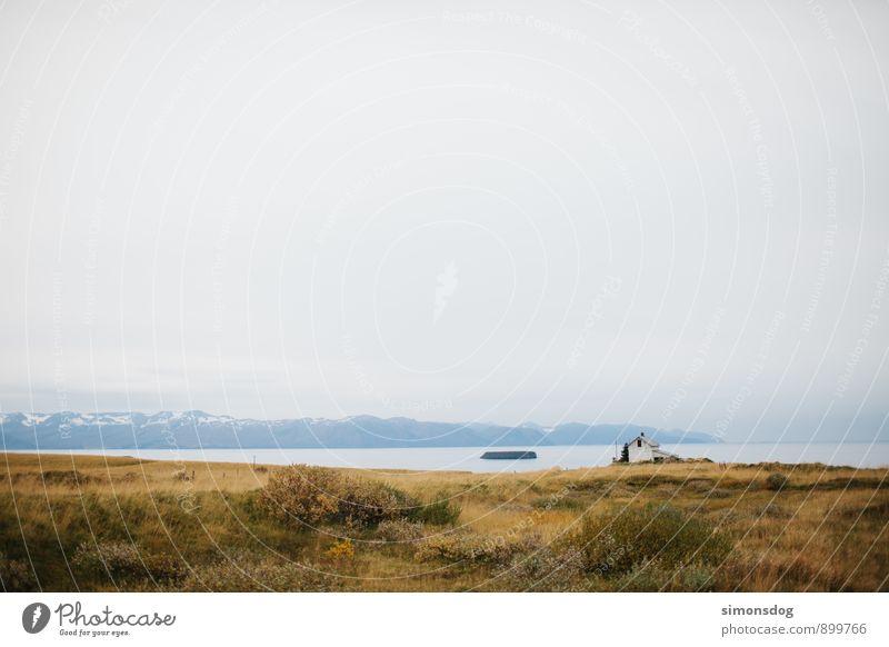 I'm in Iceland. Landschaft Pflanze Gras Sträucher Berge u. Gebirge Gipfel Freiheit Ferien & Urlaub & Reisen Haus Fjord Island Dürre Wolken Ferne