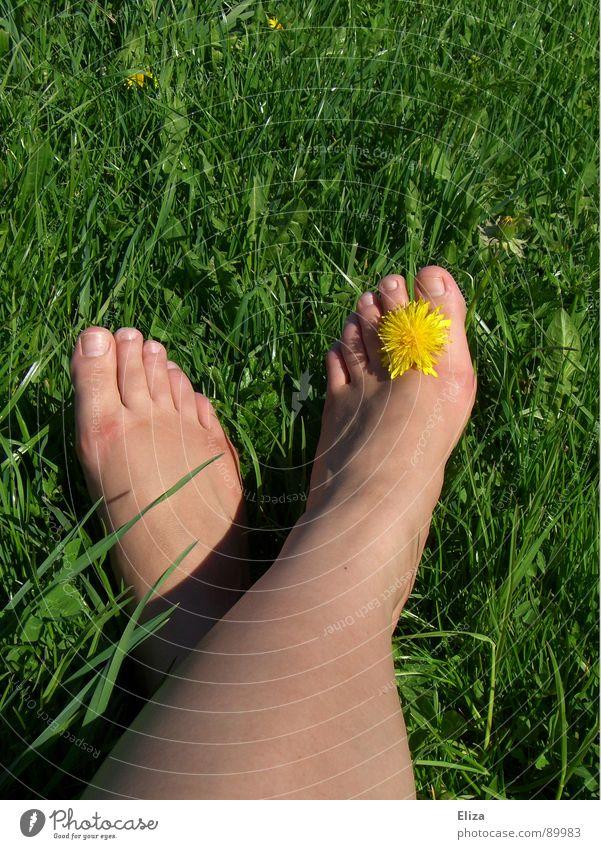 biologischer Fußschmuck Frau Natur grün schön Pflanze Sommer Blume Erholung gelb Wiese Leben nackt Wärme Spielen Frühling Gras