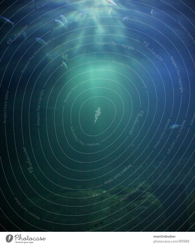unterwasser Wasser Himmel Sonne Meer grün blau Unterwasseraufnahme See Beleuchtung planen Fisch tauchen türkis Aquarium anmutend blau-grün