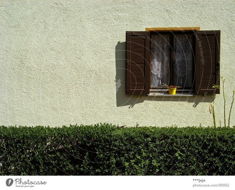 german vorgarten, baby! Blume Haus Fenster Wand Deutschland Ordnung trist Häusliches Leben Langeweile Gardine Blumentopf Hecke Wohnsiedlung Fensterladen Spießer