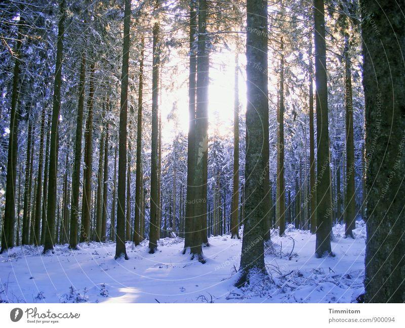 Wohlfühloase | Zu jeder Jahreszeit. Umwelt Natur Pflanze Himmel Sonne Sonnenlicht Winter Wetter Schnee Baum Wald hell kalt schwarz weiß Gefühle Baumstamm