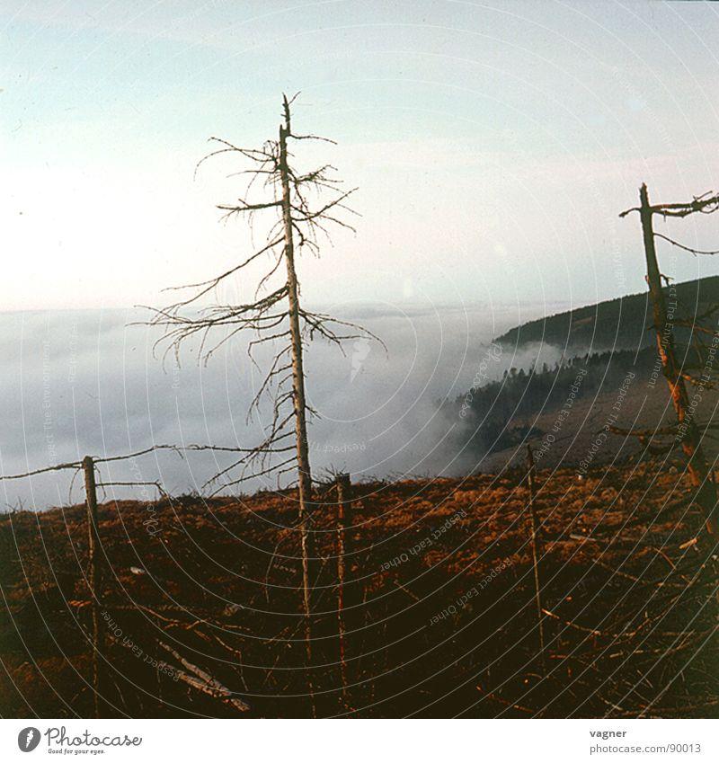 Gebirge Sonnenaufgang Nebel Baum trocken Wald Herbst Berge u. Gebirge Morgen Rauchschaden