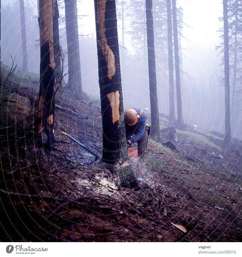 Holzschlag Mann Baum Wald Nebel Arbeiter Forstwirtschaft Fichte Säge Abholzung fällen Motorsäge