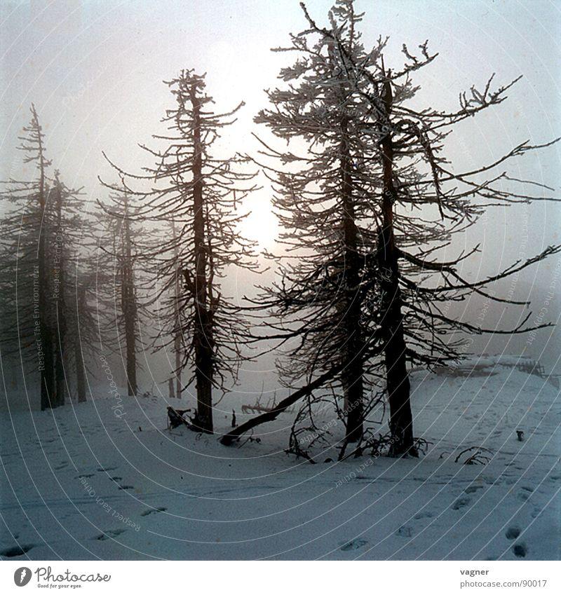 Nebel Baum Sonne Winter Wald Schnee Nebel Saurer Regen