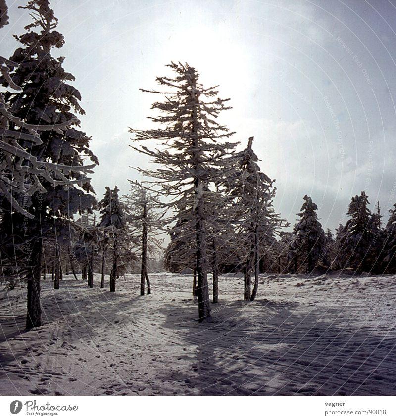Der Wald stirbt Winter Baum Nebel Saurer Regen Sonne Schnee Abend