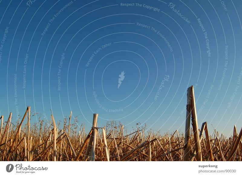 Sky Natur Himmel blau Sommer Feld Aussicht Dürre Weizenfeld