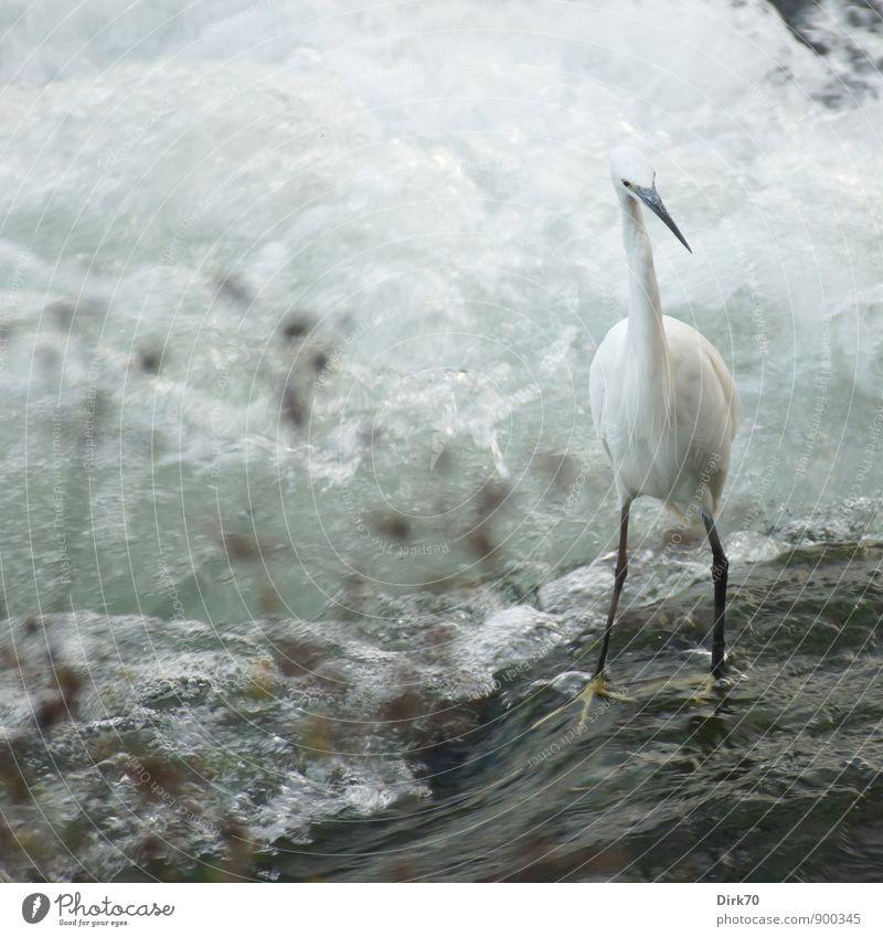 Balanceakt (slippery when wet) Umwelt Wasser Sommer Pflanze Wellen Küste Flussufer Po Wasserfall Stromschnellen Gischt Schaum Turin Italien Stadtzentrum Tier
