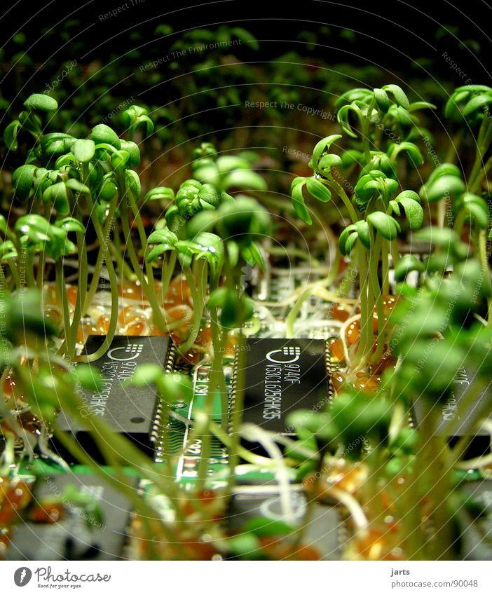 Grün gewinnt II Bioprodukte Erfolg Wissenschaften Computer Internet Erneuerbare Energie Natur Pflanze Wachstum grün Vergänglichkeit Platine Elektrisches Gerät