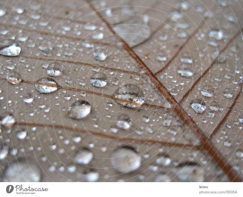 morgentau Blatt Herbst braun Wassertropfen Seil Regen