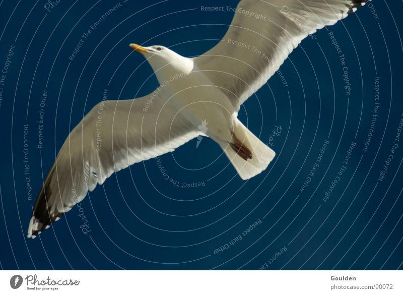 Geier ohne Turnschuhe schön Himmel weiß Meer blau Sommer Strand Ferien & Urlaub & Reisen Erholung Freiheit See Wärme Luft Vogel Küste Luftverkehr