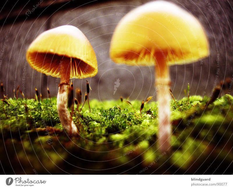 Glowing New World Natur grün Pflanze gelb Leben Herbst Wand Mauer klein Umwelt Wachstum Blühend Weltall Sonnenschirm Pilz Botanik