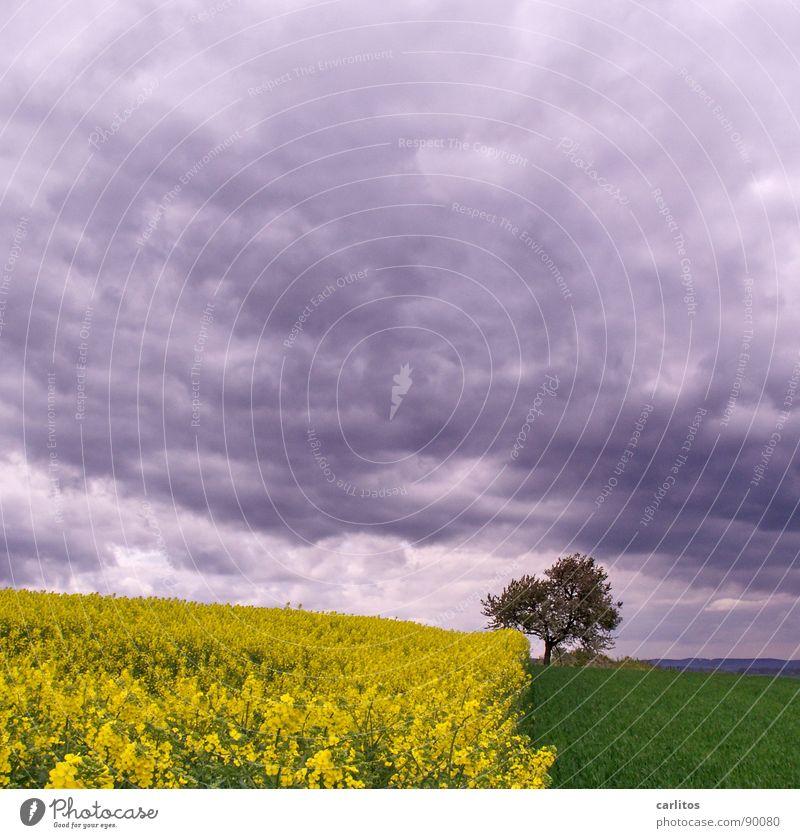 Voll im Trend .. Baum grün Wolken gelb Blüte Frühling Landschaft Feld Geometrie Raps Dreiteilung