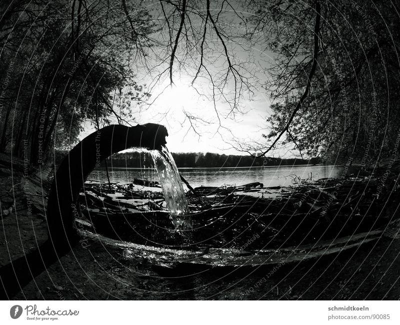 frischwasser Abwasser See Meer Umwelt Abfluss Abflussrohr Baum Müll Fischauge Gegenlicht schwarz weiß Horizont Wasser Trinkwasser einleiten Küste Himmel Sonne