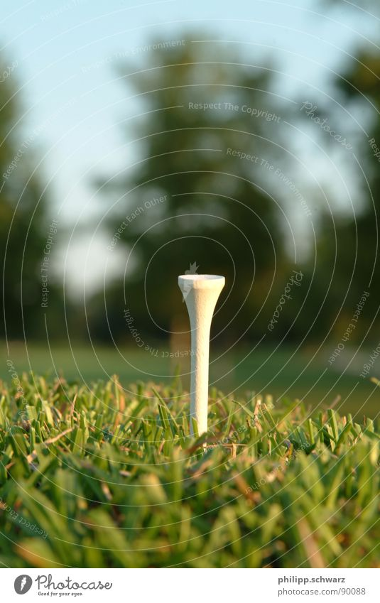 The Golftee Golfplatz Wiese Gras grün Ballsport Spielen Tee golftee holztee