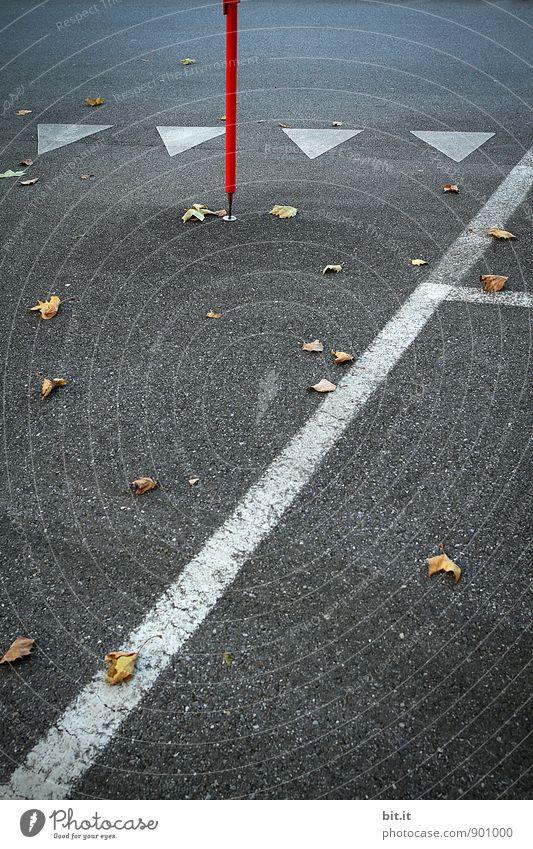 Jahresgezeiten-Marker... Straße Wege & Pfade Zeichen Schilder & Markierungen Verkehrszeichen Linie Pfeil Termin & Datum herbstlich Herbst Beton betoniert
