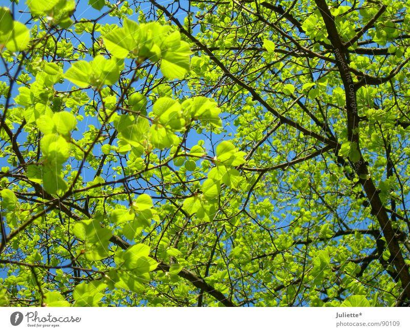 Aufgesprosst Natur Baum grün Blatt Leben Frühling frisch Ast