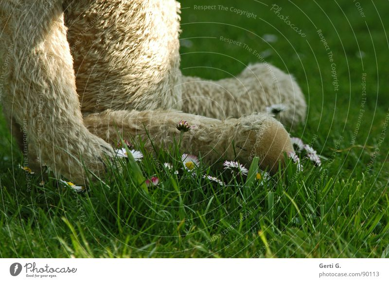ich möchte ein Eisbär sein Teddybär Fell Stofftiere Tier Spielzeug Kuscheln kuschlig Aufenthalt Erholung Gänseblümchen Wiese Gras Blume Halm Spielen