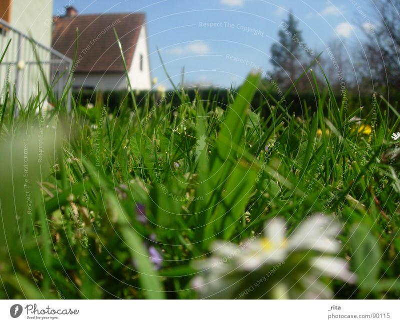froschperspektive grün Gras Haus unten Froschperspektive Frühling Sommer schön Gänseblümchen Zaun Tanne Wolken blau schönwetter Himmel