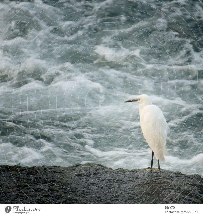 Geduld   Warten auf Beute Natur blau weiß ruhig Tier schwarz kalt Küste grau hell Vogel Wellen Wildtier stehen warten nass