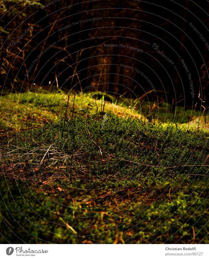 Im Wald dunkel Lebenslauf Baum Wildnis Fichte Waldlichtung Waldboden Geäst Blattadern Natur hell Sonneneinstrahlung Moos