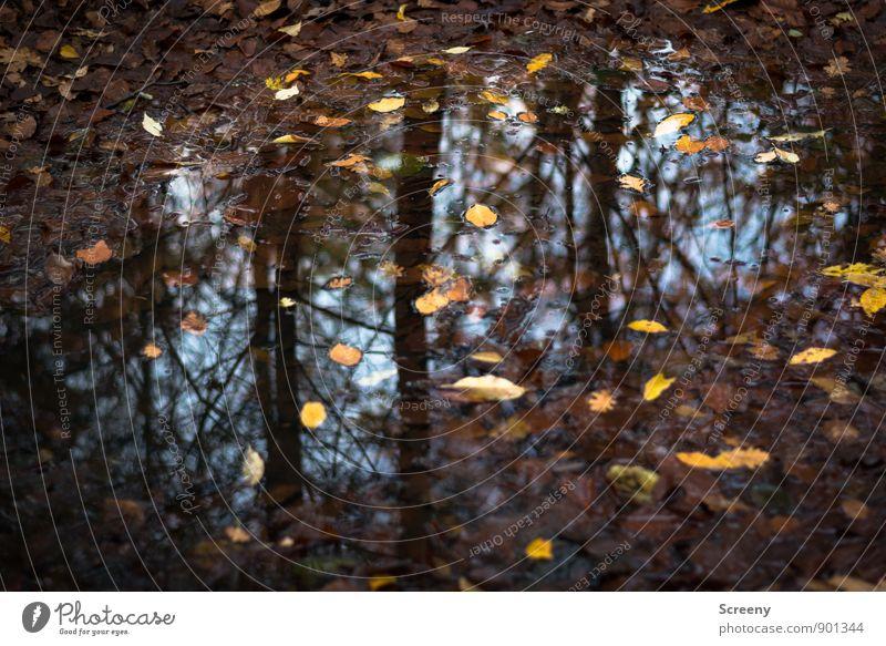 Herbstlich nass Natur Pflanze Erde Wasser Himmel Regen Blatt Wald blau braun gelb Stimmung ruhig Pfütze Reflexion & Spiegelung Waldboden Farbfoto Detailaufnahme