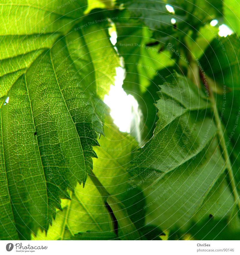 Ab durch die Hecke Natur Baum Sonne grün Pflanze Farbe Frühling Garten Park Buche