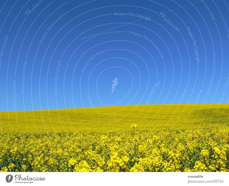 raps #8 Himmel Ferien & Urlaub & Reisen gelb Frühling Freiheit Eis Feld fliegen Streifen Stengel Blühend Landwirtschaft Abgas Schönes Wetter Bioprodukte Produktion