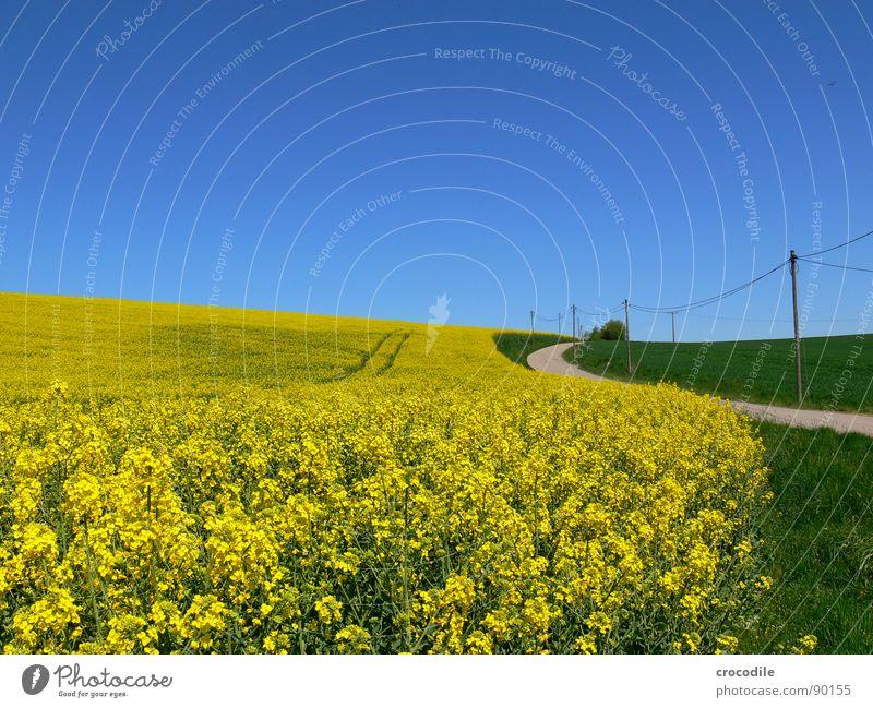 raps #9 Himmel Ferien & Urlaub & Reisen gelb Straße Wiese Gras Frühling Freiheit Eis Feld fliegen Horizont Elektrizität Spuren Streifen Stengel