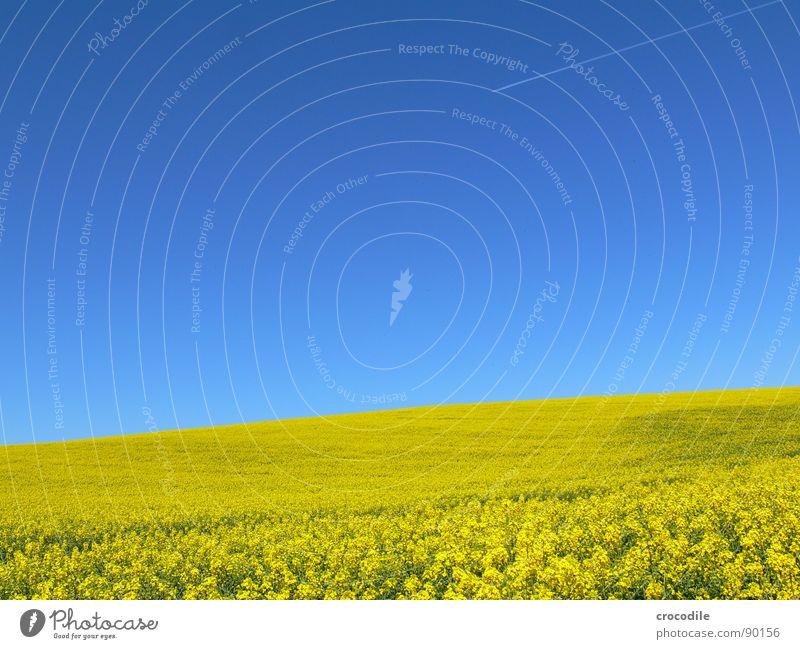 raps #10 Horizont Ferien & Urlaub & Reisen Raps Feld Frühling Diesel Kohlendioxid Klimawandel gelb Streifen Stengel Sauerstoff Landwirtschaft Blattgrün