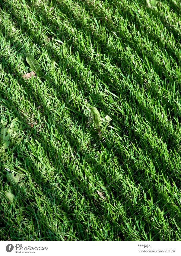 grünstreifen Farbe dunkel Wiese Gras Frühling Park hell frisch Rasen Streifen Halm gestreift Zebra Fußballplatz Grünfläche