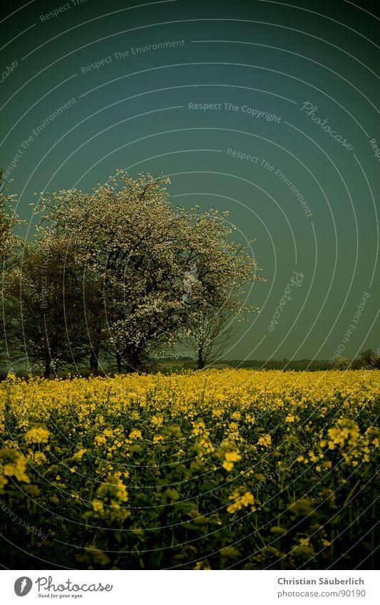 Vignettierter Frühling Baum Raps Feld gelb grün Rapsöl Biokraftstoff Landwirtschaft balu Himmel Vignette Ökobrennstoff Feld bestellen