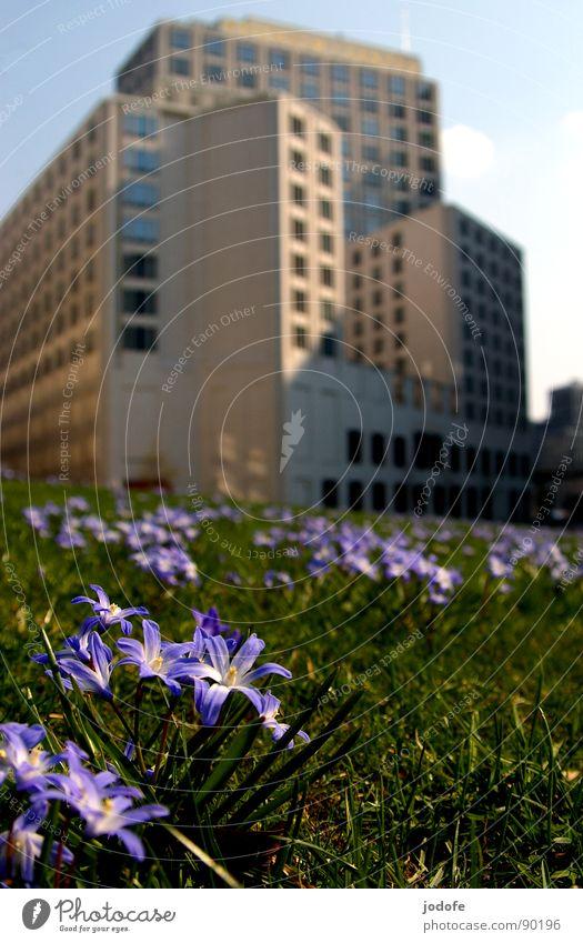Natur vs. Mensch Potsdamer Platz Gebäude Blume Blumenwiese Wiese Grünfläche violett grün Haus Stadt Café schick fein Macht kalt Architektur beisheimcenter