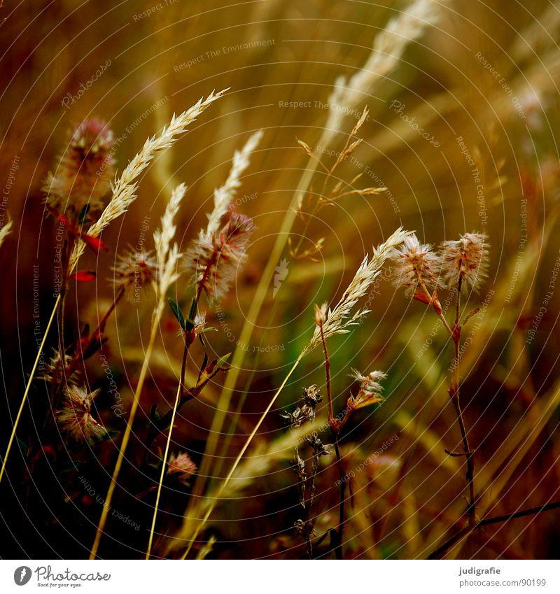 Vielfalt schön Sommer gelb Wiese Gras orange Wind gold glänzend weich zart Weide Stengel Halm sanft beweglich