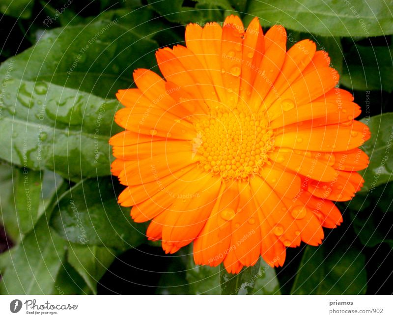 regentropfen Wasser Blume Regen Wassertropfen
