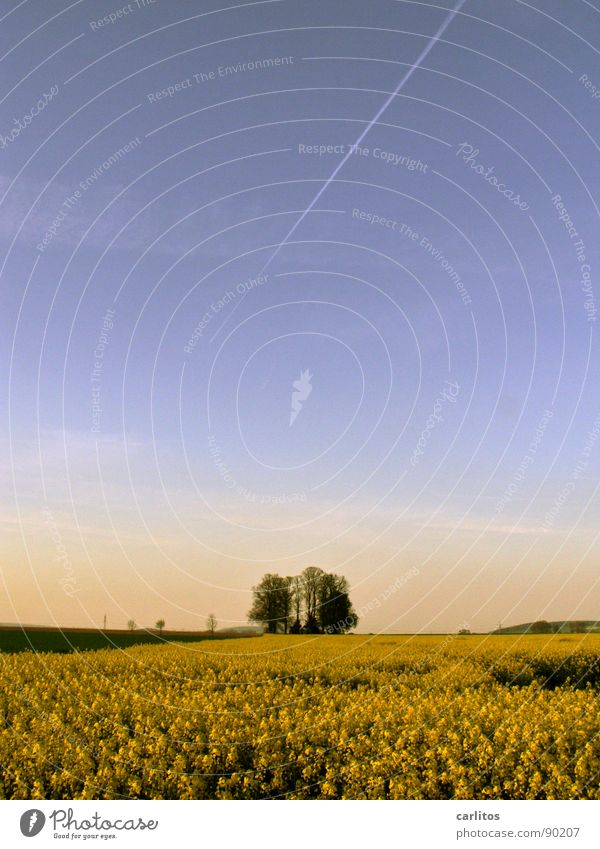 Brassica napus bis zum Horizont Himmel Baum grün blau gelb Frühling Horizont Landwirtschaft Raps Öl Rapsfeld Biokraftstoff Rapsöl