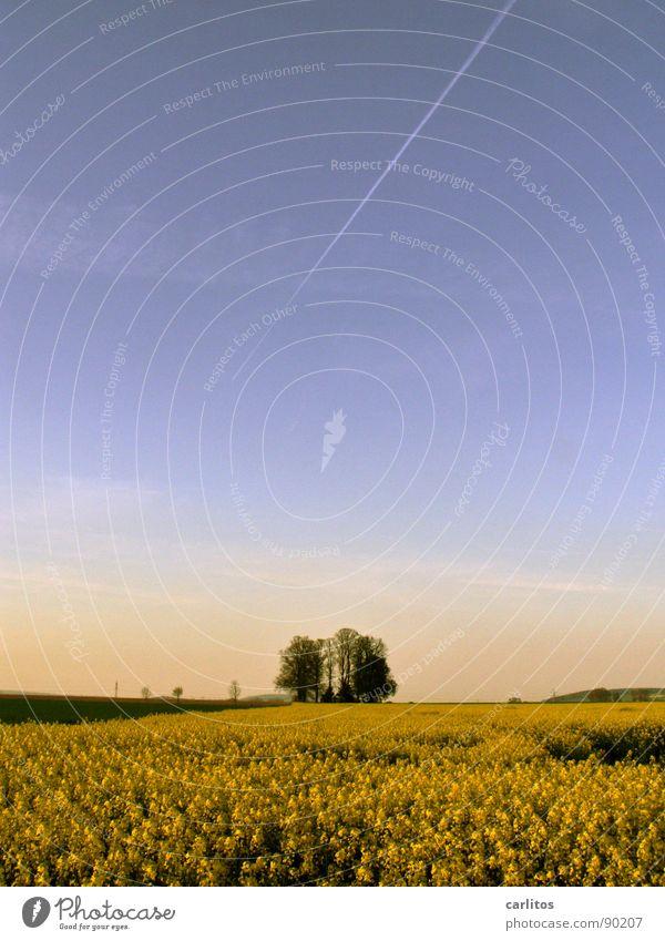 Brassica napus bis zum Horizont Raps Rapsfeld Baum gelb grün Frühling Rapsöl Biokraftstoff Landwirtschaft blau Himmel Ökobrennstoff