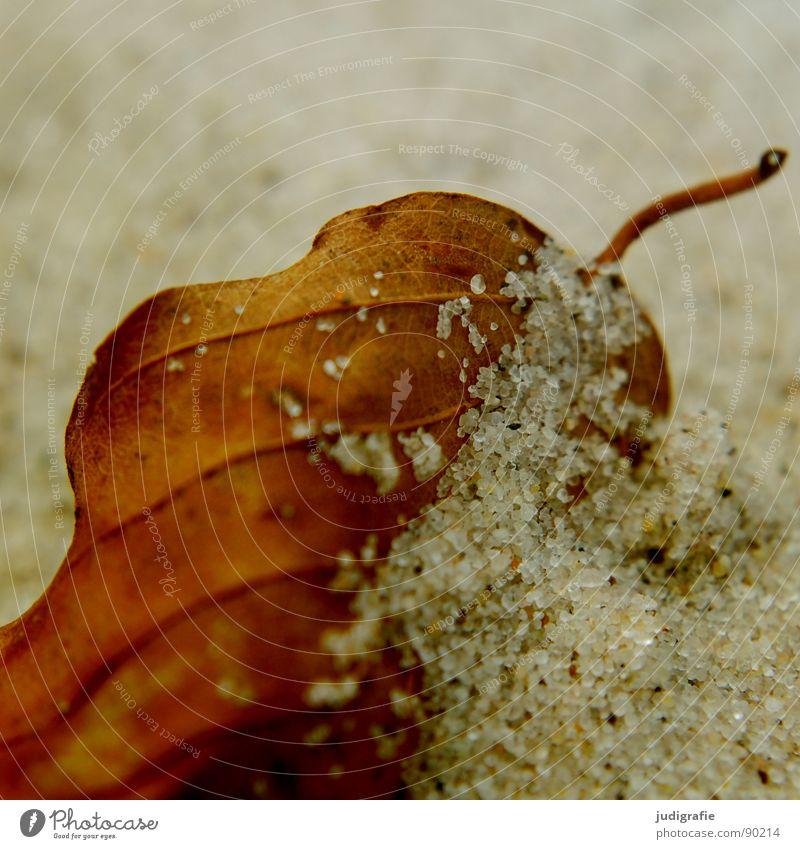 Berührung Blatt Strand Sandkorn fein nah Herbst Weststrand Makroaufnahme Nahaufnahme Küste Strukturen & Formen getrocknet Tod