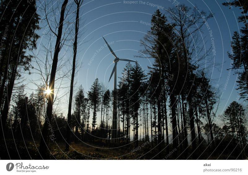 Windkraft am Roßkopf 2 Himmel Wald Linie Perspektive Energiewirtschaft Elektrizität Technik & Technologie Windkraftanlage Geometrie Paradies Waldlichtung Standort himmelblau Laubbaum Nadelbaum Nadelwald