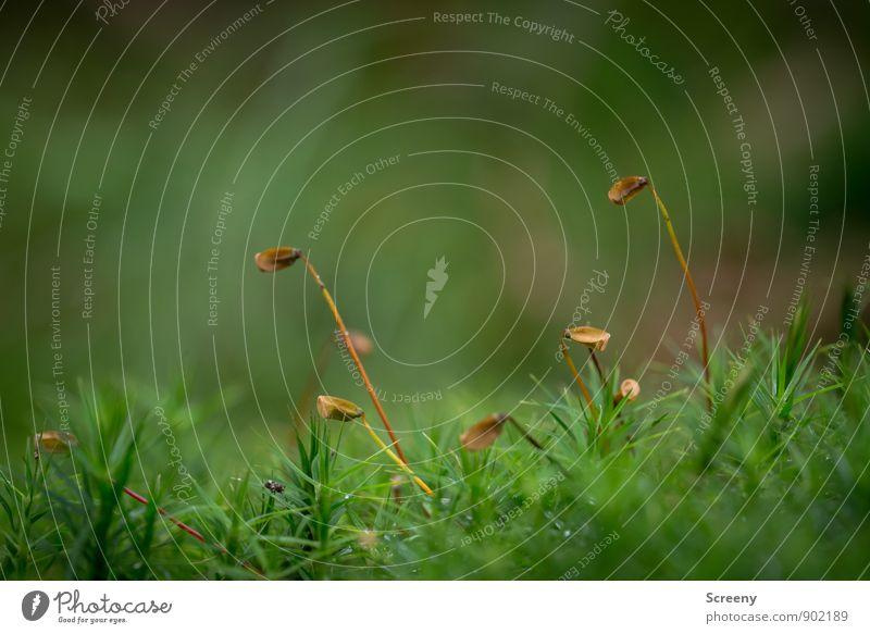 Golfschlägerentsorgung Natur Pflanze grün Landschaft ruhig Wald Herbst klein braun Gelassenheit Moos
