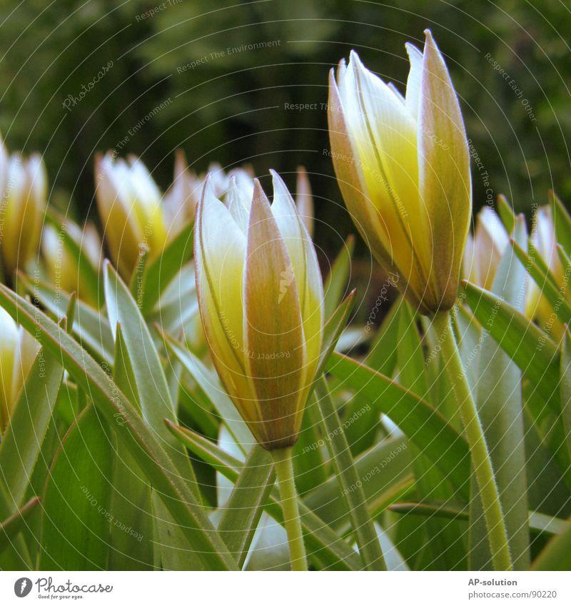gelbe Blümchen Blühend Pflanze Blume Blüte Wachstum Makroaufnahme bestäuben Frühling Sommer violett grün Blumenstrauß Biene Frühlingsgefühle schön zart Botanik