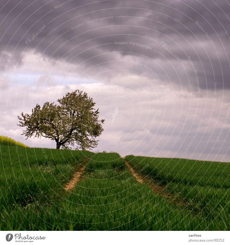 Wieder kein Beton ... Feld Aussaat aufgehen Landwirtschaft Spuren Traktorspur Baum Obstbaum Blüte Wolken dunkel Frühling Getreide Raps am Bildrand Himmel