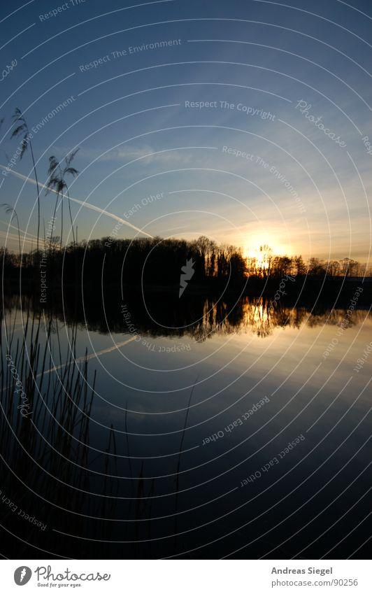 Sonne geht baden Wolken Sonnenuntergang See Wald Baumreihe Stimmung Romantik schön kalt Kondensstreifen dunkel Reflexion & Spiegelung Schilfrohr schwarz