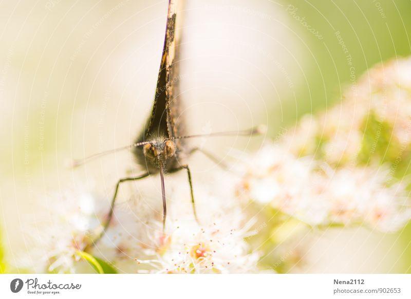 Face to face Umwelt Natur Pflanze Tier Luft Frühling Sommer Schönes Wetter Sträucher Blüte Wildpflanze Garten Park Wiese Feld Schmetterling Tiergesicht 1 Essen
