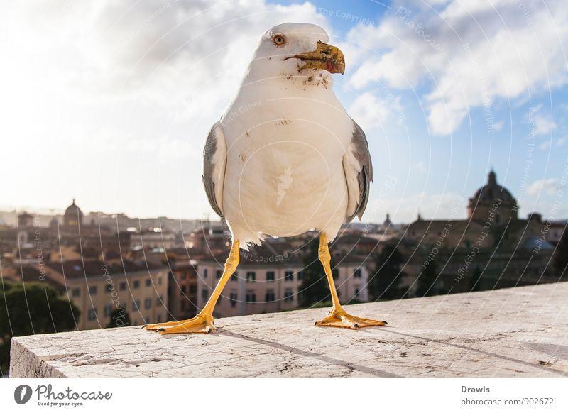 Großstadtmöwe blau Stadt weiß Tier gelb Bewegung grau Stein gehen Vogel dreckig wild Wildtier stehen Beton bedrohlich