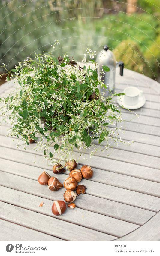 TulpenZwiebeln Tasse Herbst Schönes Wetter Blume Topfpflanze Garten Blühend authentisch natürlich grün Zufriedenheit Stillleben Tulpenzwiebeln Pflanzzeit