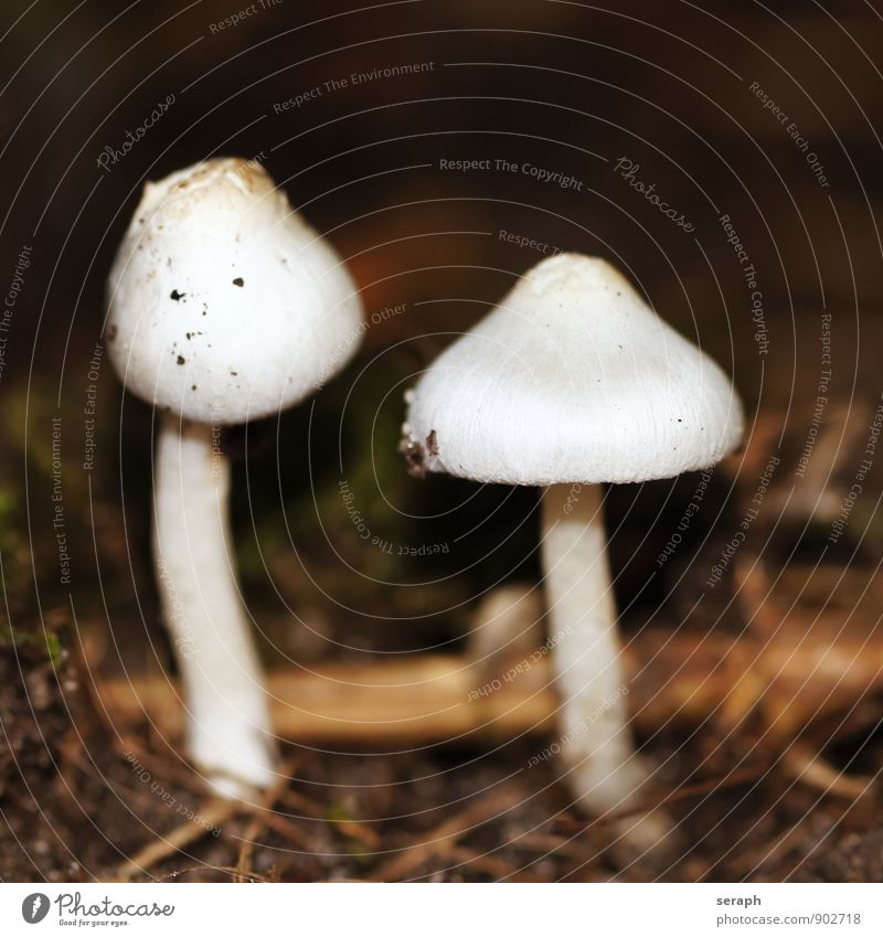 Pilze Makroaufnahme Erde Sporen Natur herbstlich Pilzhut Menschengruppe Anhäufung Frucht Wohnsiedlung cap Lamelle Pflanze Herbst toadstool Symbiose Boden