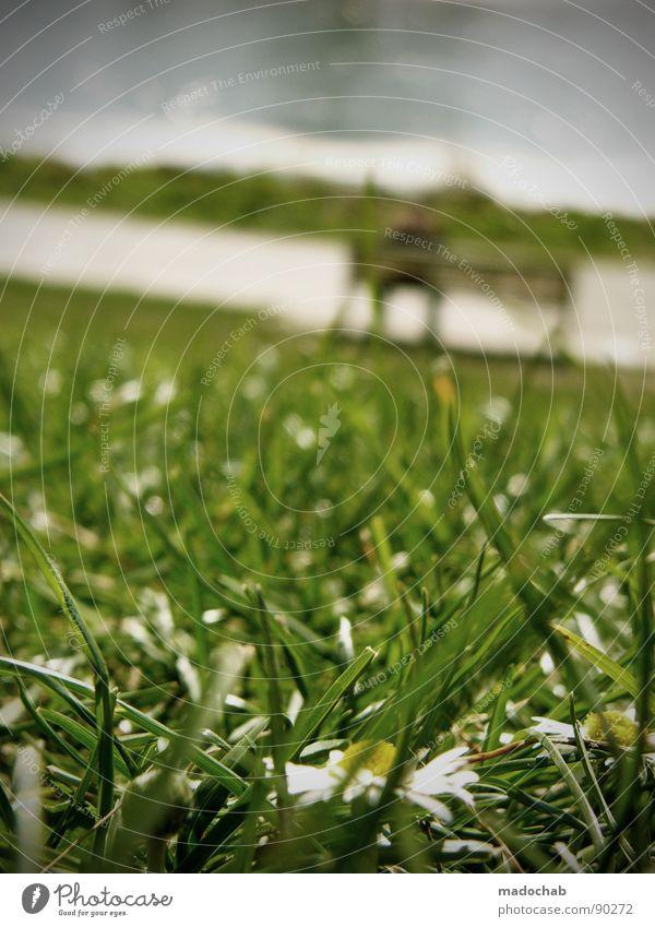 ENTSPANNUNG IN HANGLAGE Gras grün Wiese Park Steigung Halm Natur Parkbank Mensch Erholung Sommer Blume falsch Pause stagnierend Unschärfe